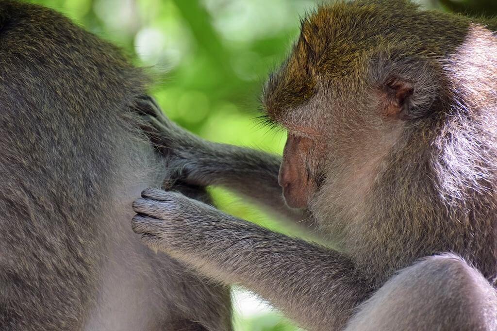 Affen beim Lausen - Persönliches Erscheinungsbild