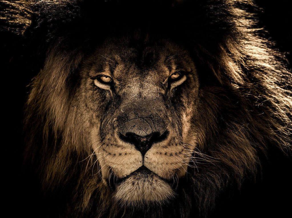 Löwe als Bild für Gesichtspflege und Wahrnehmung
