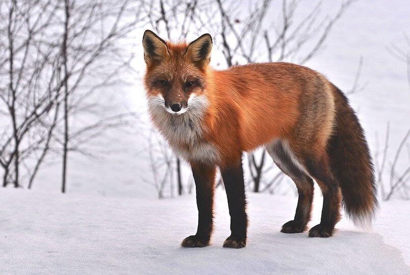 3 von 10 Kundentypen Feilscher - Vergleich Fuchs, Schnee, Wald