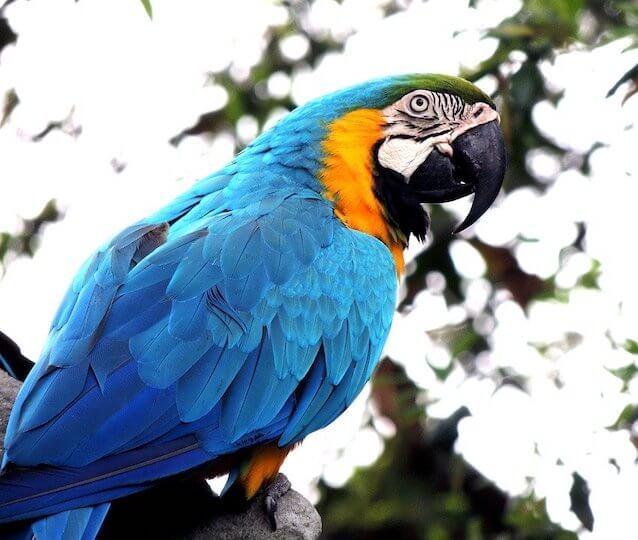 10 von 10 Kundentypen Redner - Vergleich Papagei