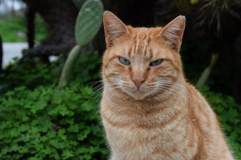 1 von 10 Kundentypen Skeptiker - Vergleich Katze, skeptischer Blick