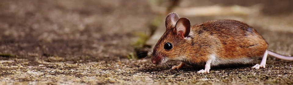 9 von 10 Kundentypen der Verlegene - Vergleich Maus