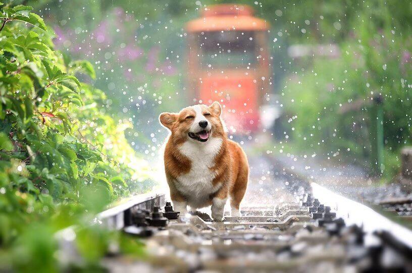 Hund sieht optimistisch und glücklich aus